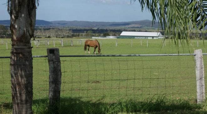 Horse & Livestock Agistment