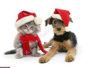Dog and Cat Xmas