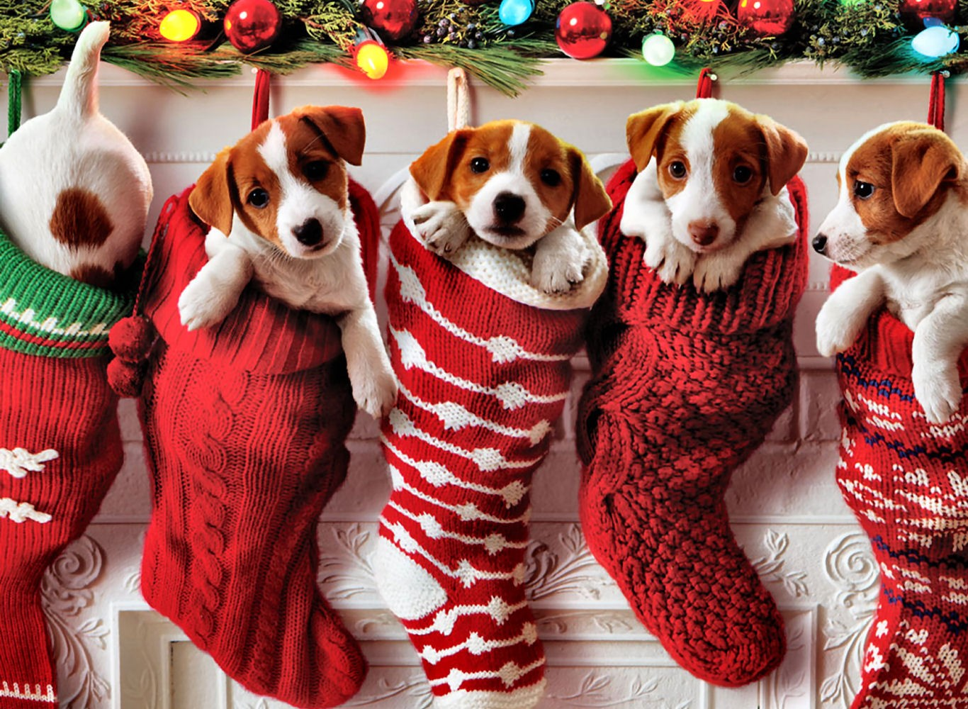 Dogs-Puppy-cats-Animals-Christmas-Photos-Images.jpg